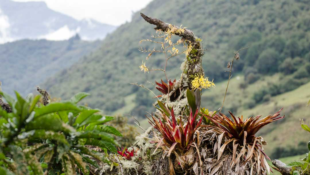Orchids and Bromeliads; Papallacta, Ecuador | ©Angela Drake