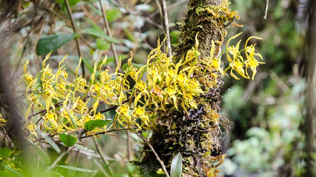 Wild Yellow Orchids; Papallacta, Ecuador | ©Angela Drake