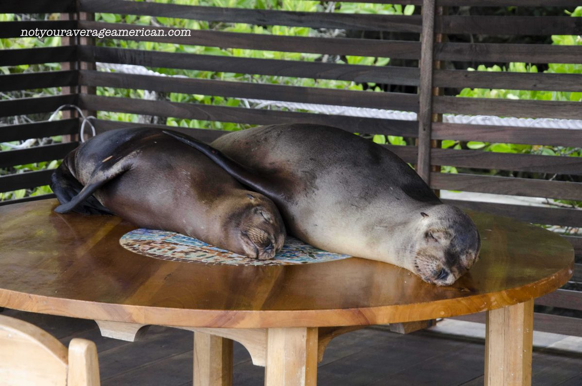 Sea Lions Take Over Hotel in the Galapagos