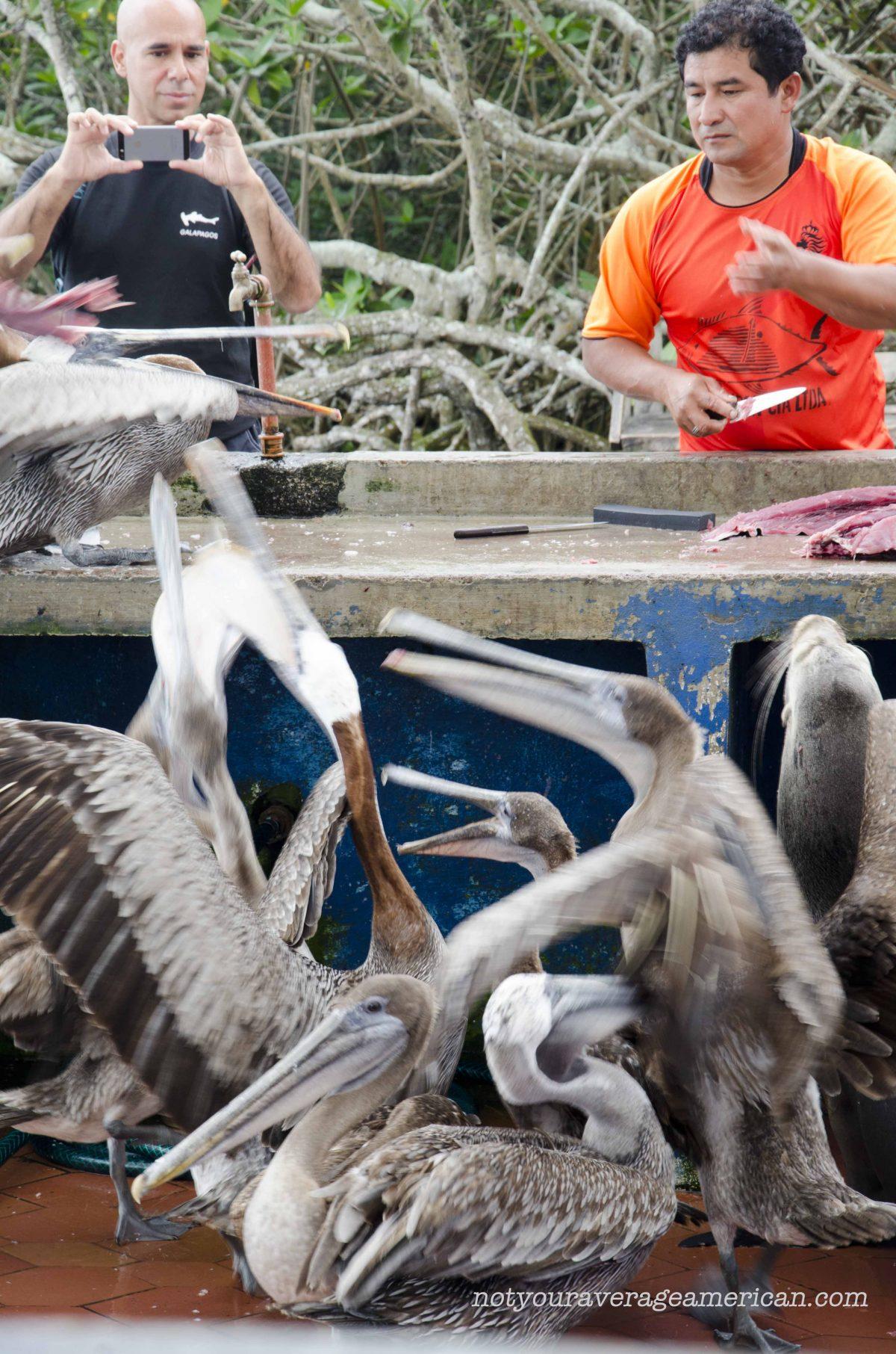 Tourist Snaps Photo of Fish Scrap Chaos | ©Angela Drake
