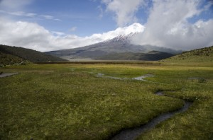 Wetlands in Cotopaxi National Park