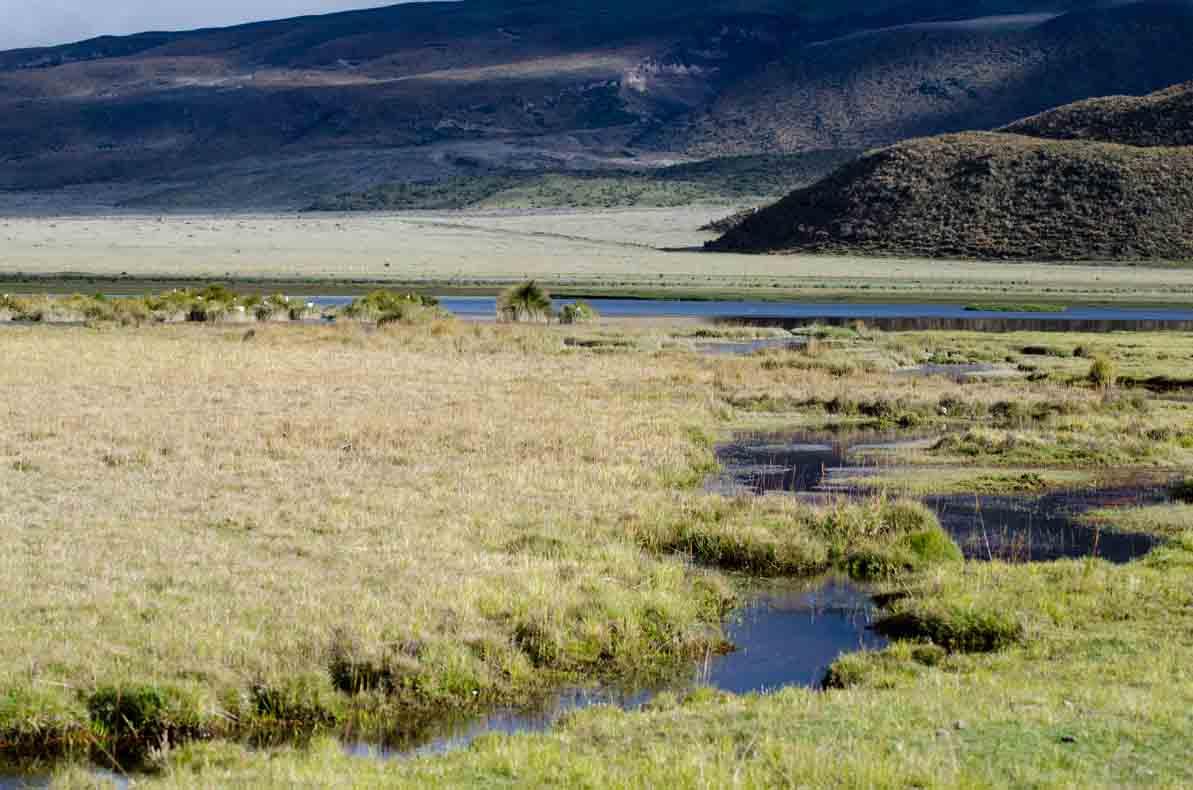 Marshlands at Laguna Limpiopungo, Cotopaxi National Park, Ecuador | ©Angela Drake