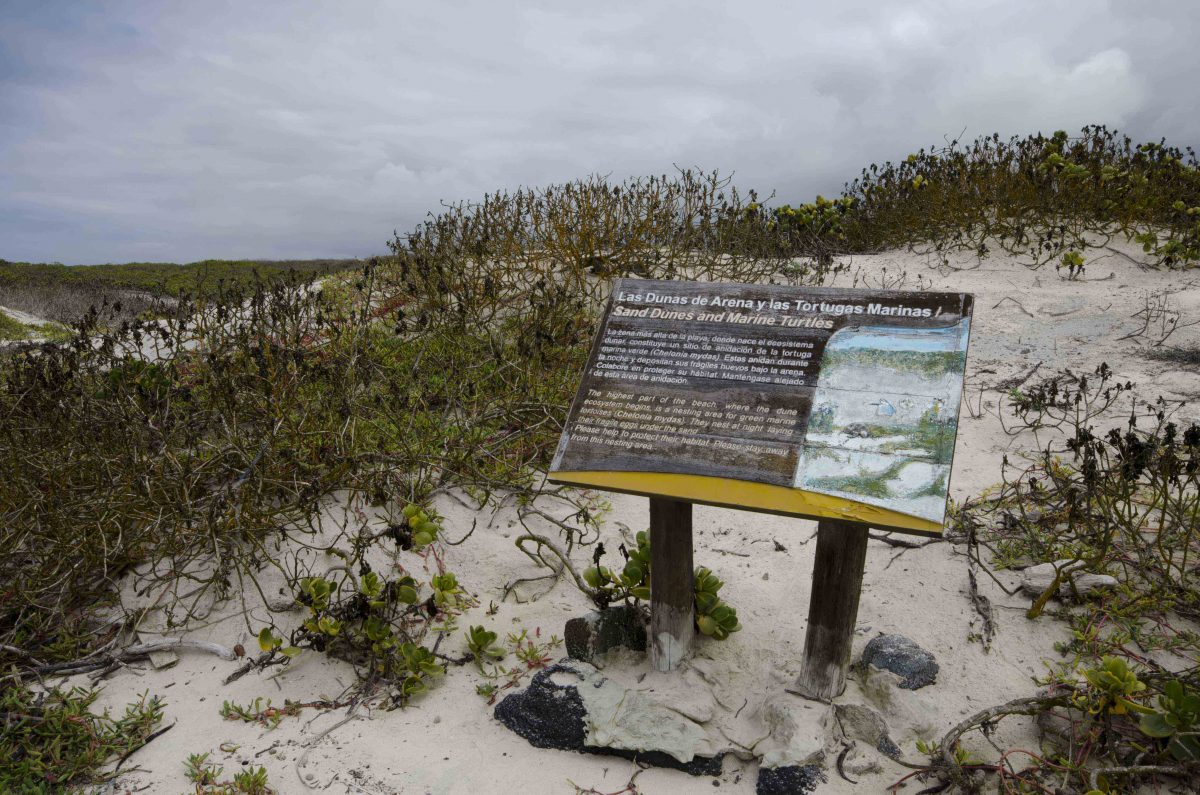 The dunes near Tortuga Bay are a fragile habitat. | ©Angela Drake