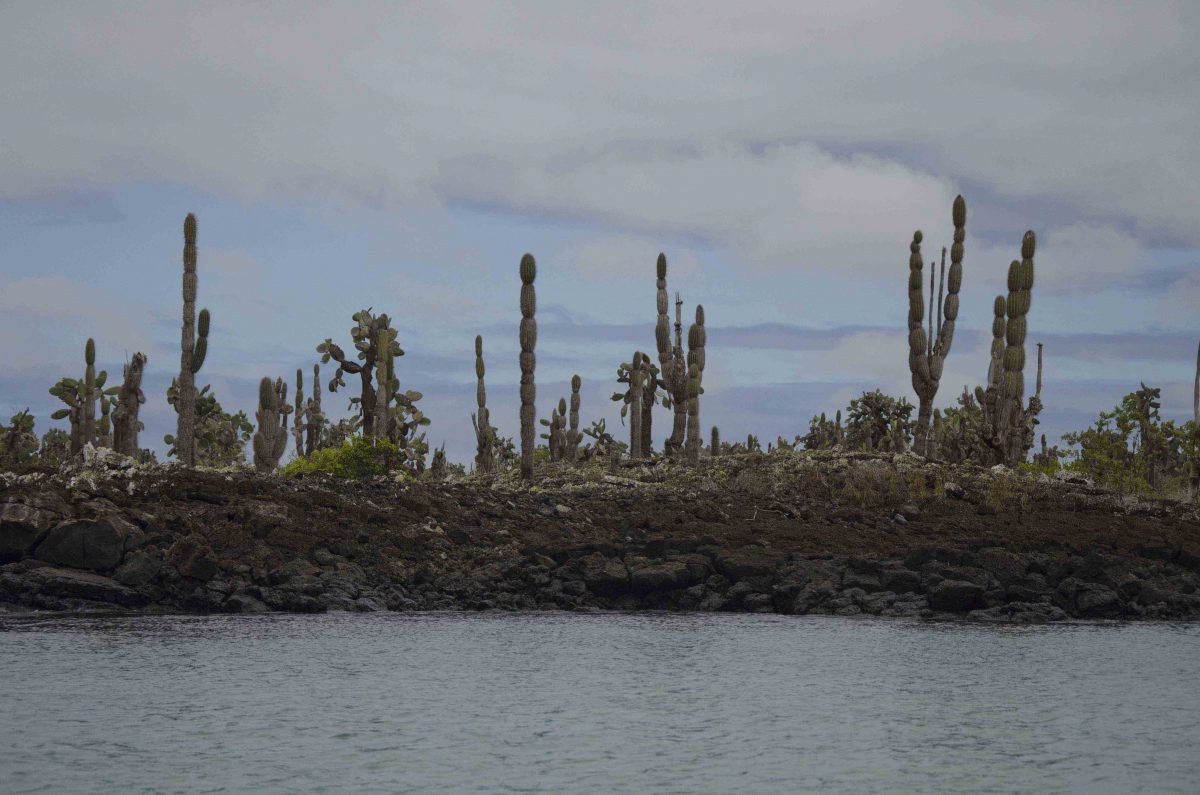 This view from the kayak shows how the Galapagos islands are really built upon ancient beds of lava | ©Angela Drake