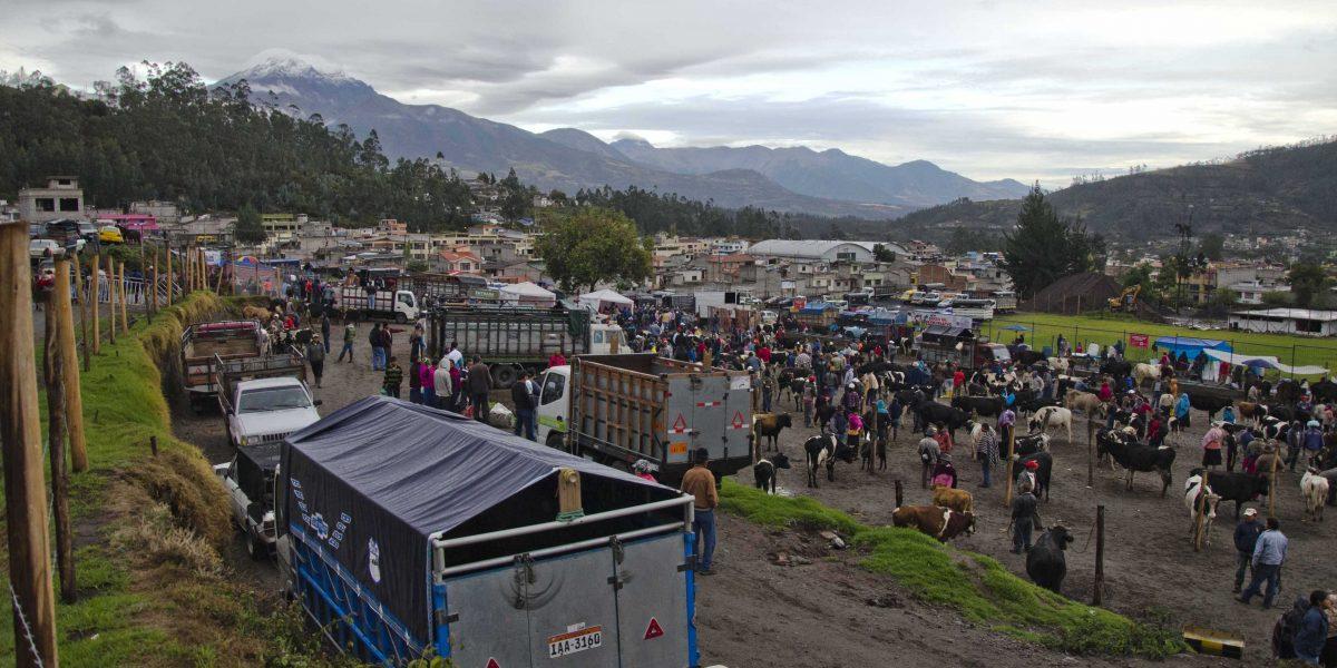 The Otavalo Animal Market; Imbabura, Ecuador | ©Angela Drake