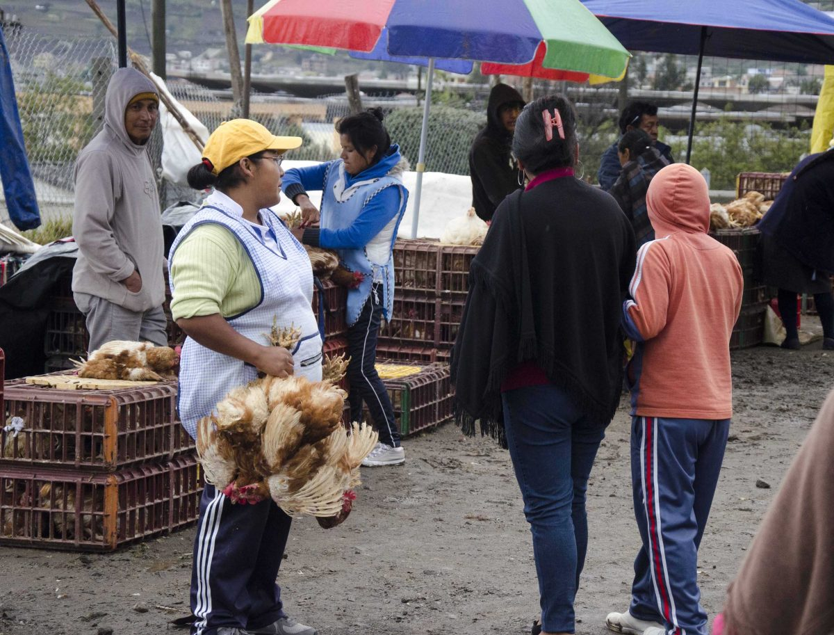 Selling chickens at the animal market, Otavalo, Ecuador | ©Angela Drake