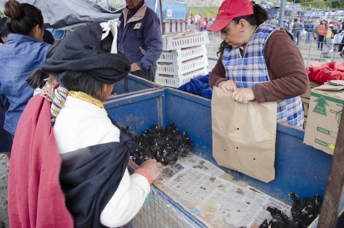 Bargaining for chickens at the animal market, Otavalo, Ecuador | ©Angela Drake