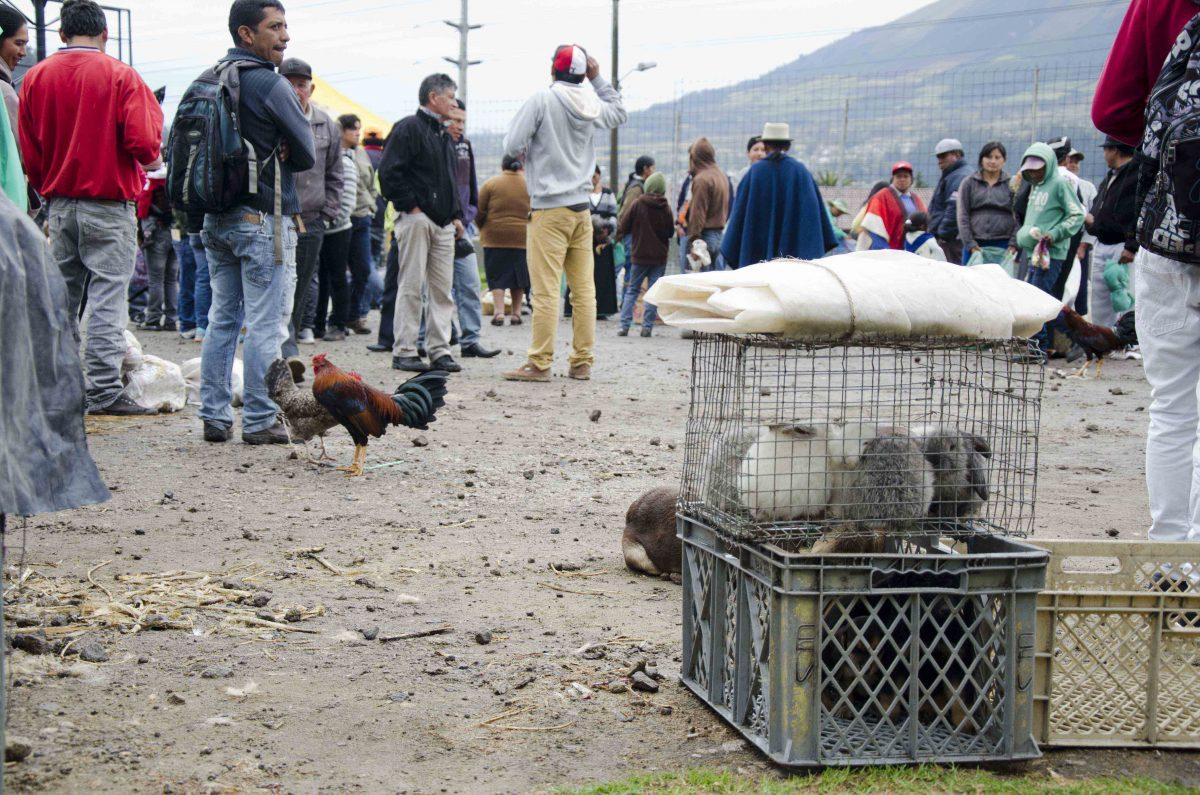 The Otavalo Animal Market, Imbabura, Ecuador | ©Angela Drake