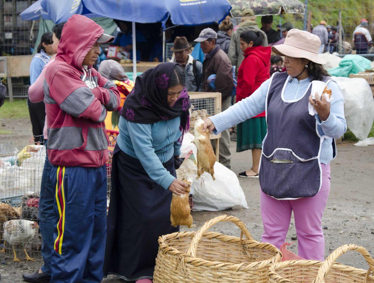 Bargaining For Guinea Pigs, Otavalo Animal Market, Ecuador | ©Angela Drake