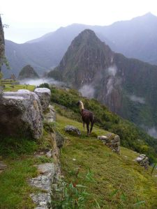 The Machu Picchu equivalent to a Walmart-greeter