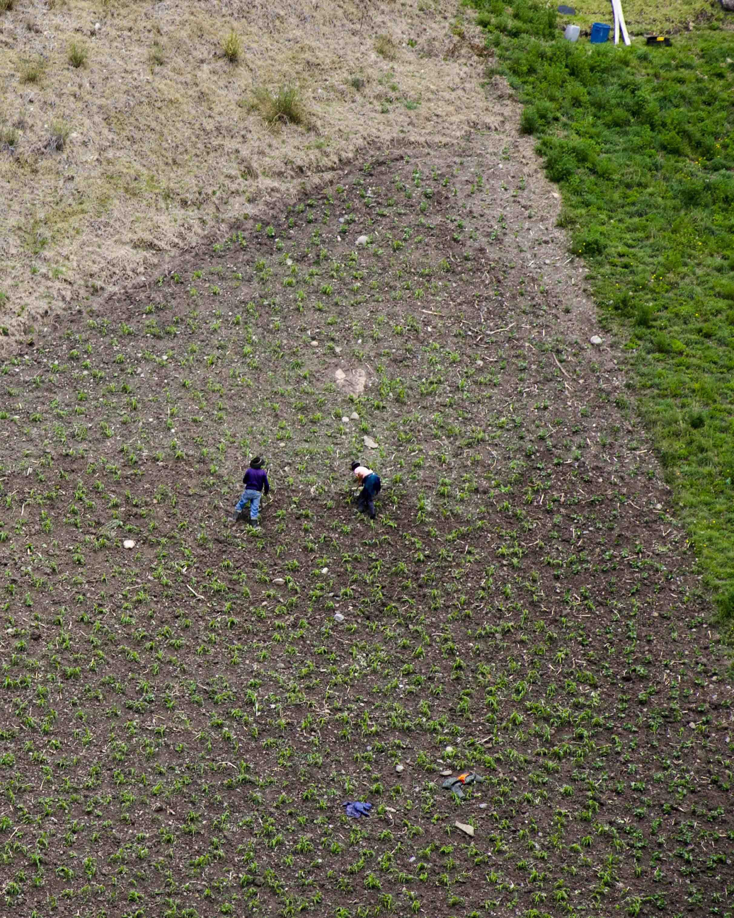 Local Farmers, Ingapirca Trails, Cañar, Ecuador