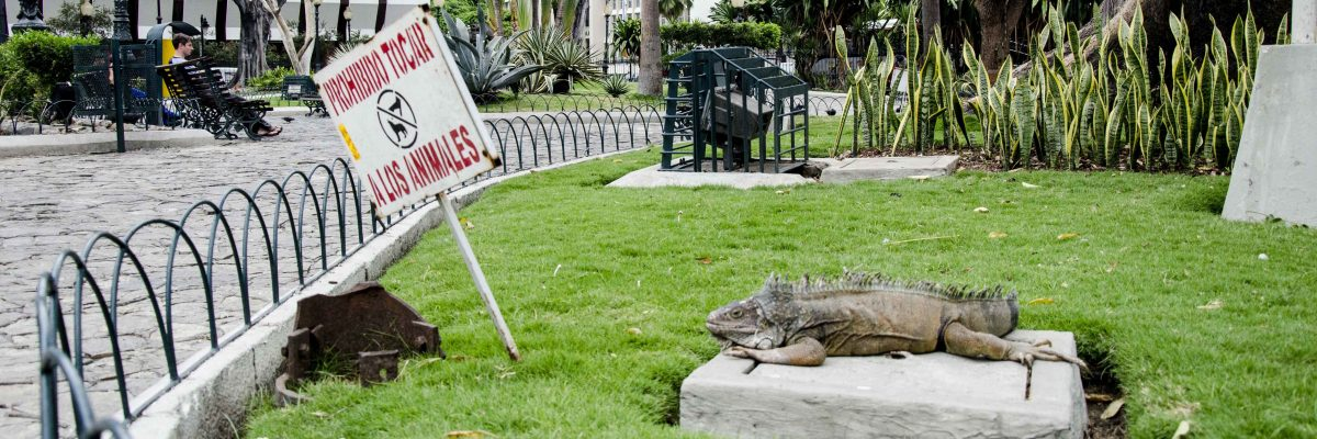 Poolside, Litter is often a problem, Parque Seminario, Iguana Park, Guayaquil, Ecuador