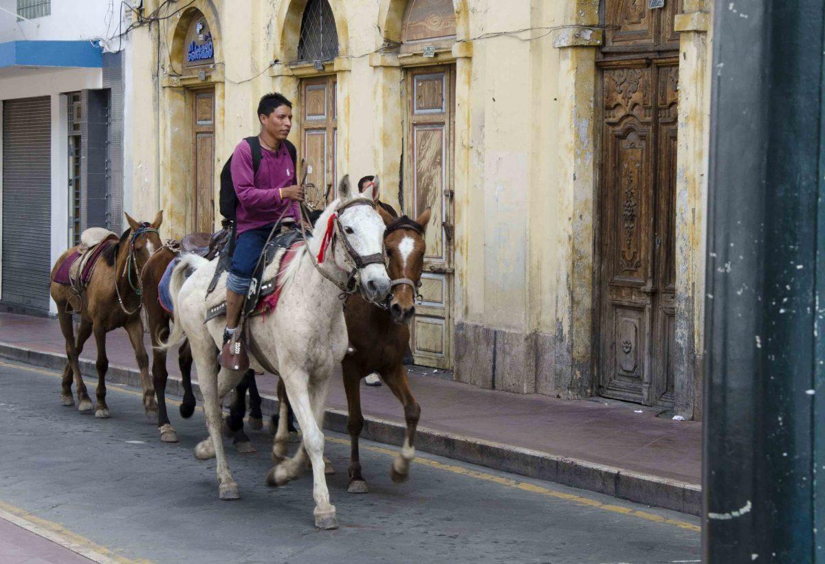 Horses with Rider on Simón Bolívar., Cuenca, Ecuador