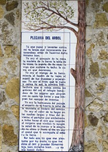 A Poem to the Tree