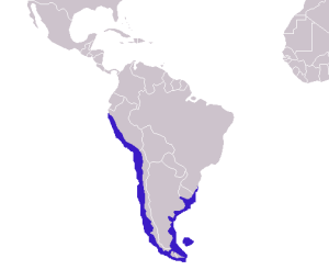 South American Sea Lion Distribution