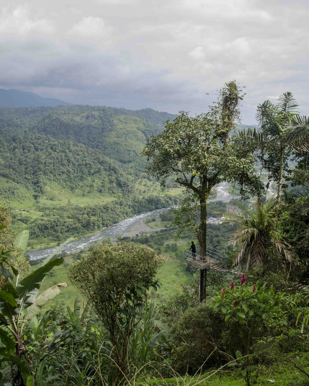 Tree Platform, San Miguel de los Bancos, Ecuador