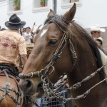 Horse in the Parade for Cacería del Zorro