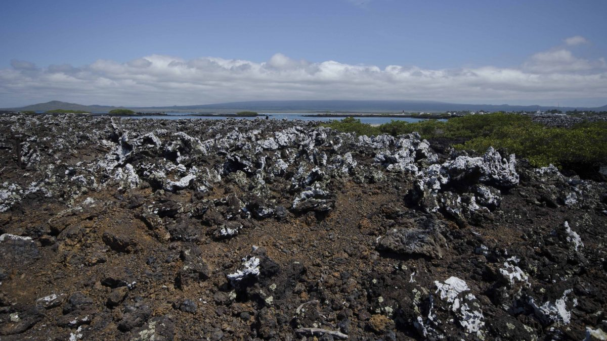 View of Lava Fields, Las Tintoreras, Isla Isabela, The Galapagos