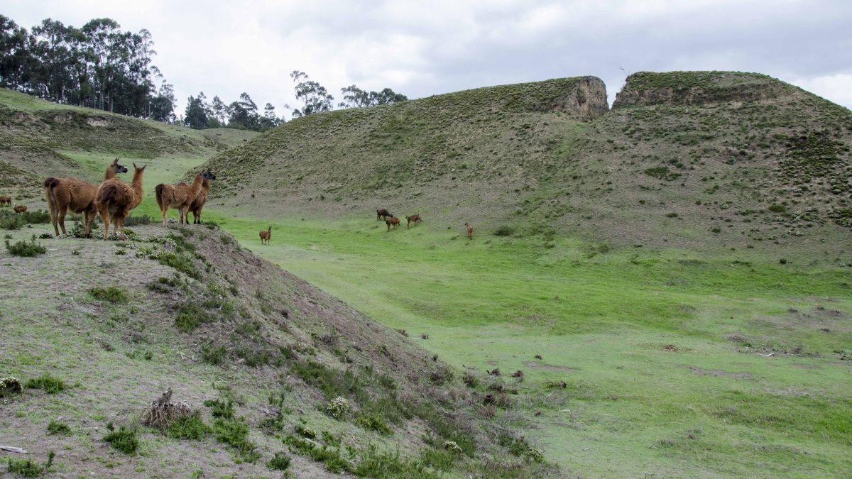 Ancient Pyramids of Cochasquí