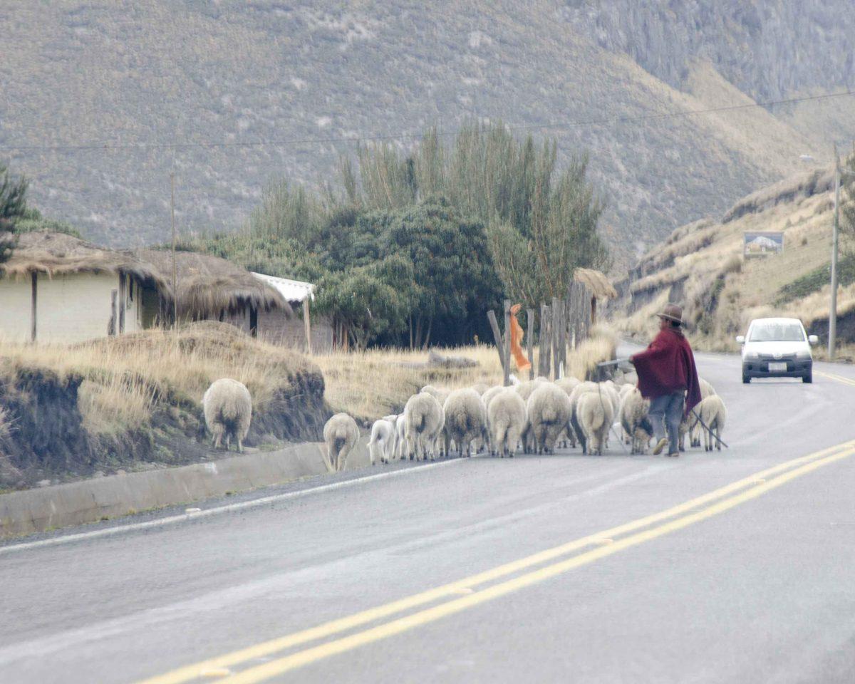Traffic congestion on the main highway near Chimborazo National Park | ©Angela Drake
