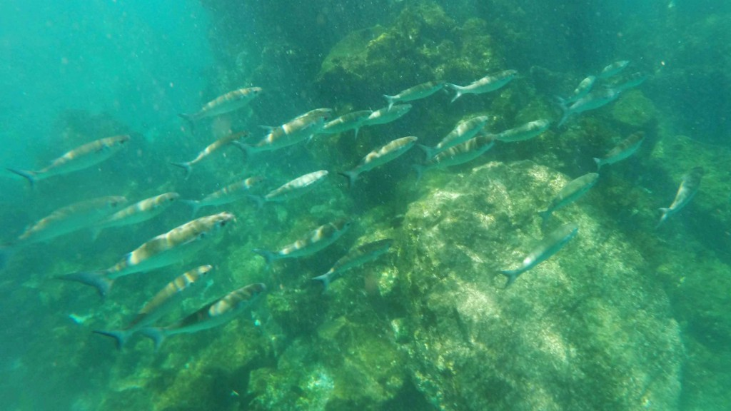 A School of Fish Found While Snorkeling