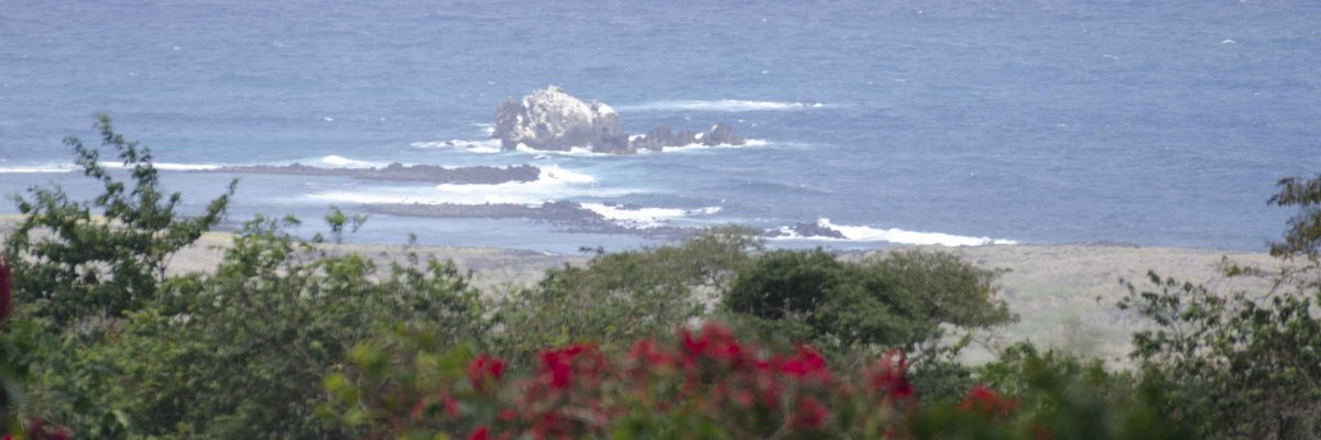 An Organic Farm on the Galapagos