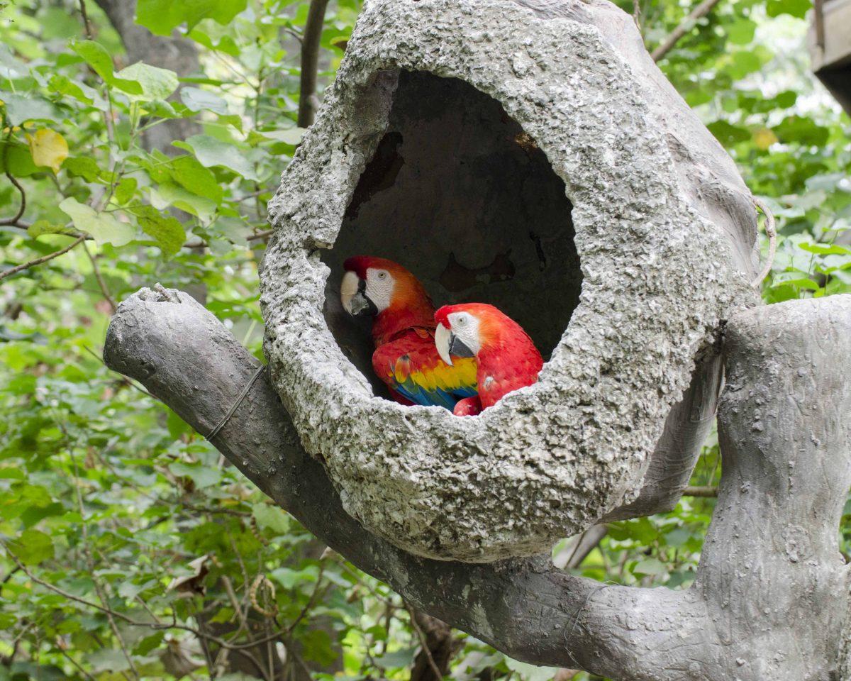 Macaw, Parque Histórico, Guayaquil, Ecuador