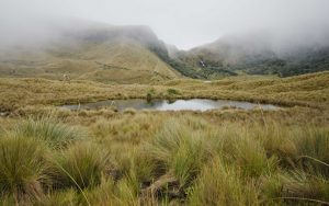 Napo Province, Pocket Lake