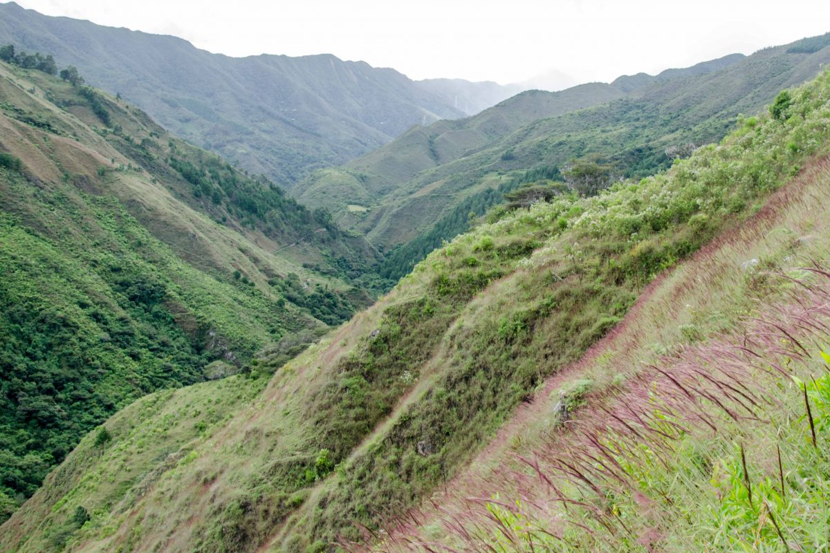 Podocarpus National Park, Loja Province, Ecuador