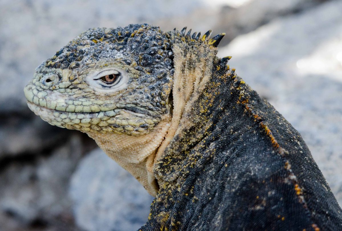 Best Shots from Santa Cruz Island, the Galapagos