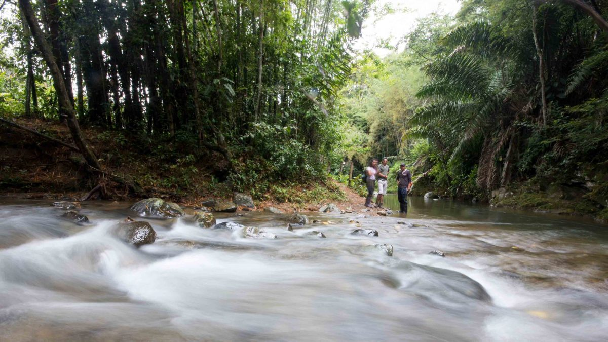 The Rio Chirapi, Pacto, Ecuador | ©Angela Drake