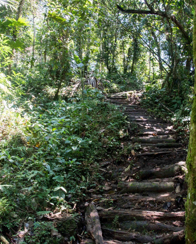 The trail through secondary forest, Cascadas Yanayacu, Napo Province, Ecuador