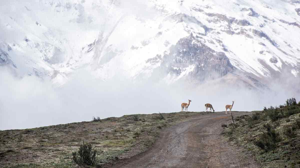 Backroad to Chimborazo Polylepis Forest, Chimborazo Wildlife Reserve, Ecuador | ©Angela Drake / Not Your Average American