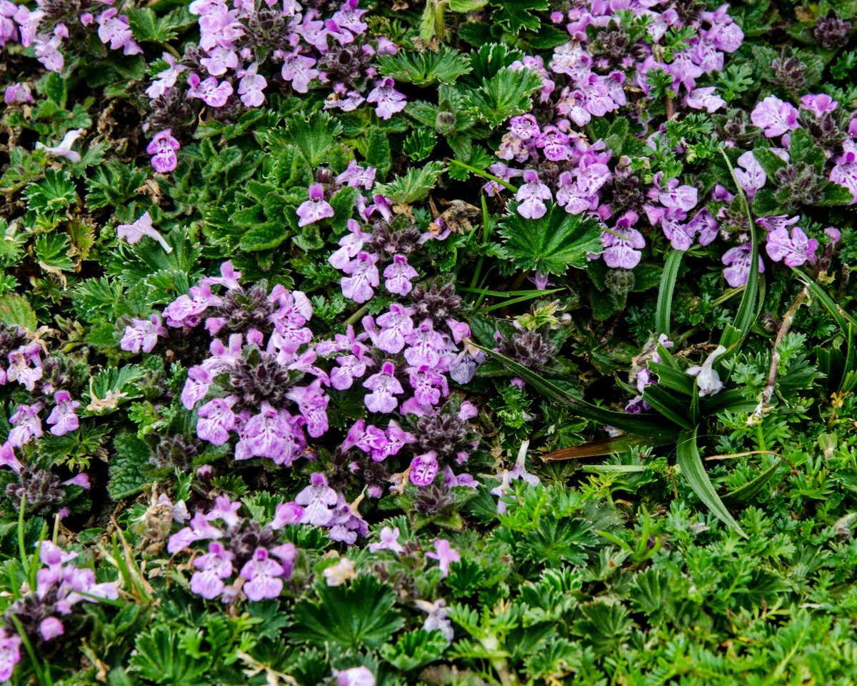 Wildflowers, Cajas National Park, Ecuador | © Angela Drake