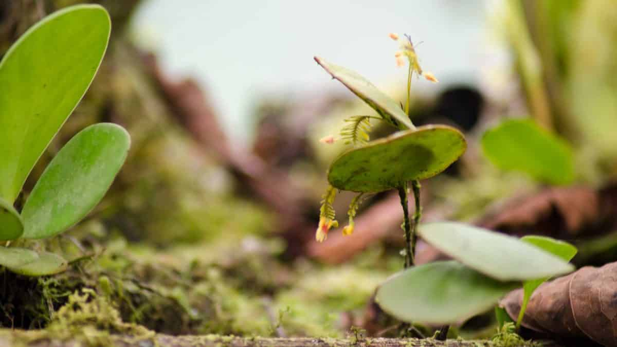 Orchids from San Jorge de Tandapaya, July 2016 | ©Angela Drake