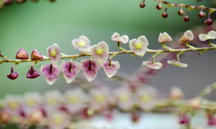 The Best Places to See Orchids in Ecuador