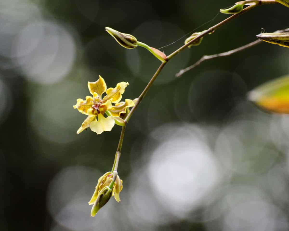 Orchids from the Botanical Garden in Guayaquil, January 2015 | ©Angela Drake