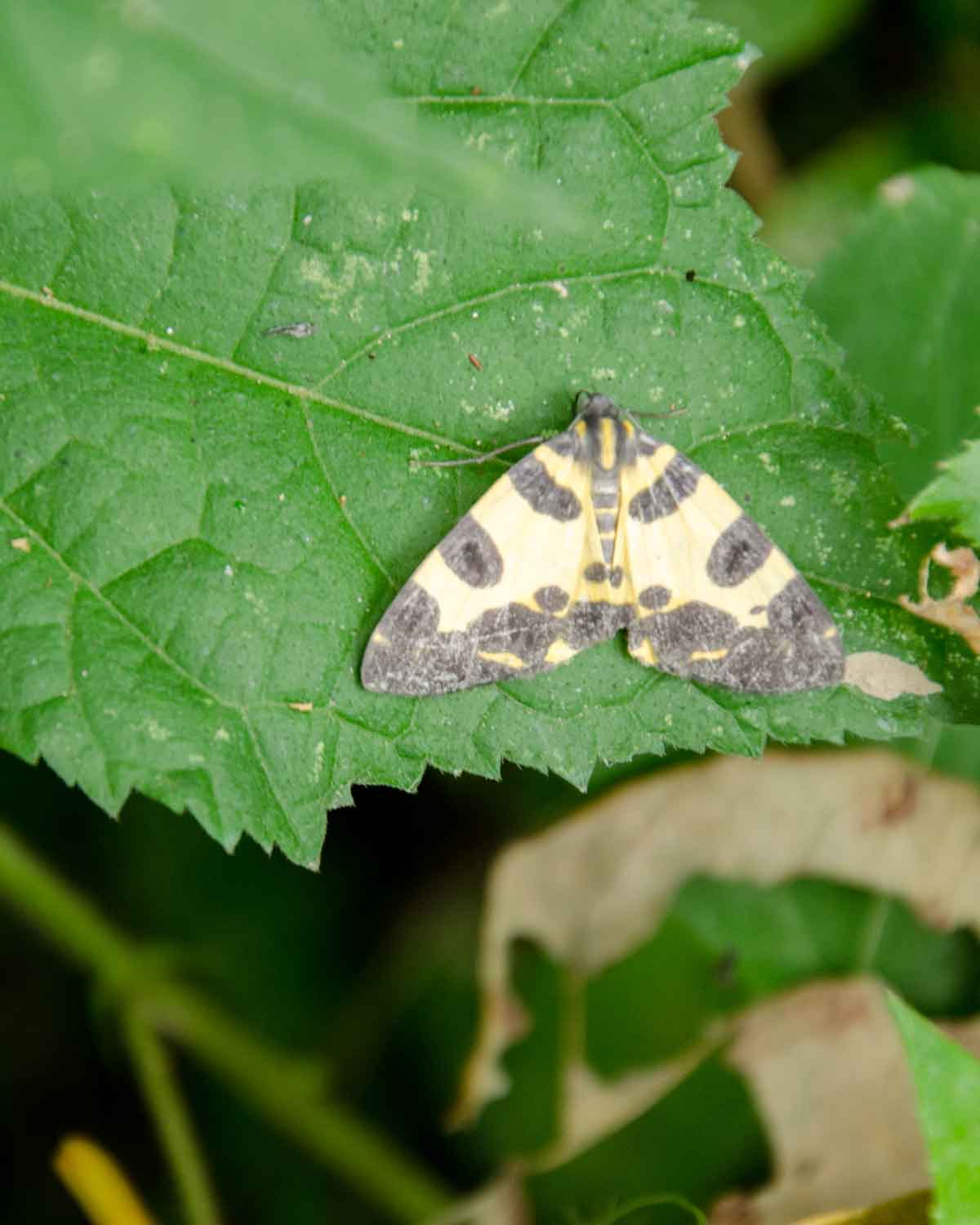 Moth on the Cascada El Palto Trail, Podocarpus National Park, Vilcambamba, Ecuador | ©Angela Drake