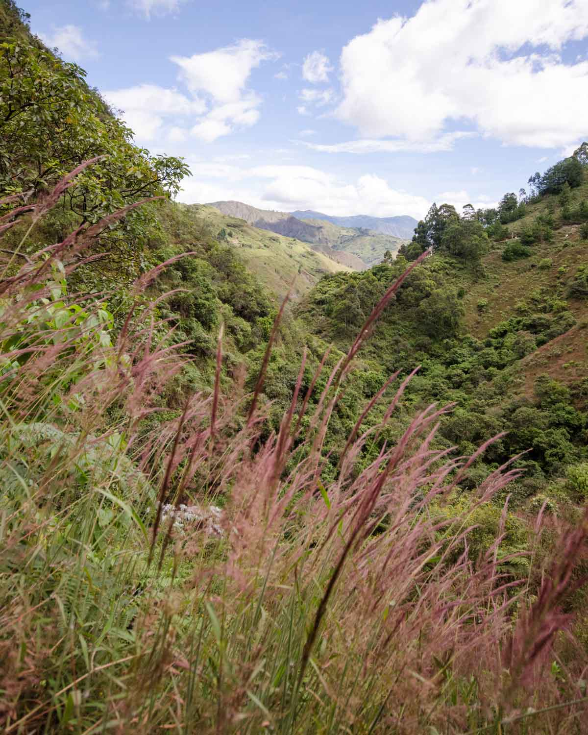 Yaragua paints the Vilcabamba countryside a pinkish burgundy hue.