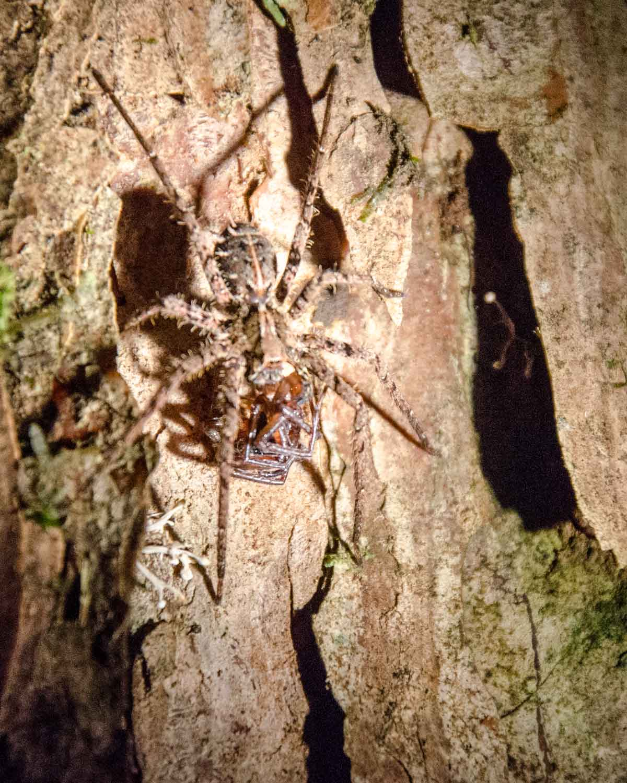 Una araña no identificada con presas; Ecolodge San Jorge de Milpe | © Angela Drake