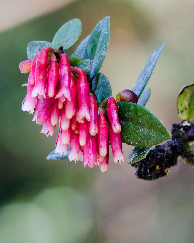 Inca Earrings from the Yanacocha Reserve | ©Angela Drake