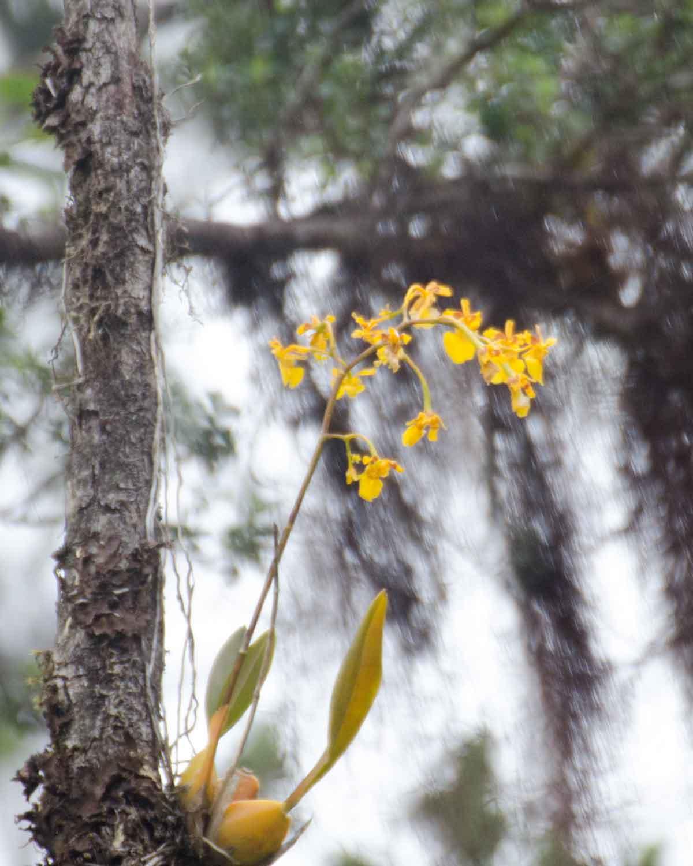 Orchids from Choco Andino de Pichincha Biosphere Reserve | ©Angela Drake