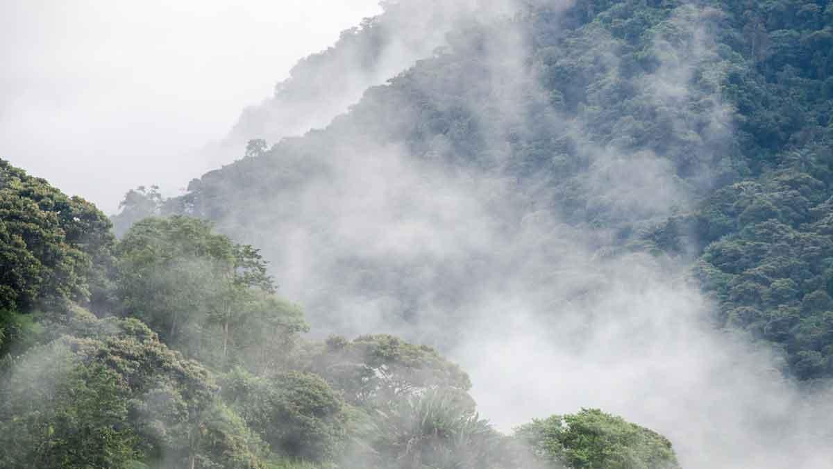High altitude cloud forests of the Choco Andino Biosphere Reserve, Ecuador | ©Angela Drake