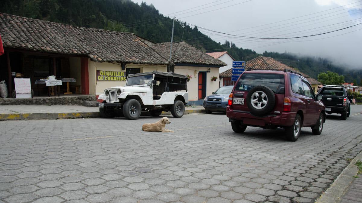 Dog in the main road connection Quito to Nono, Ecuador | ©Angela Drake