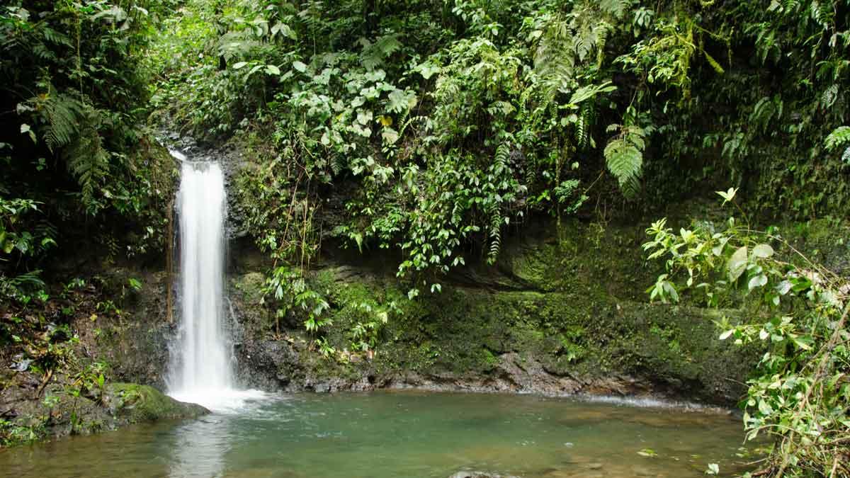 A small cascade and pool of the Choco Andino Biosphere Reserve, Ecuador | ©Angela Drake