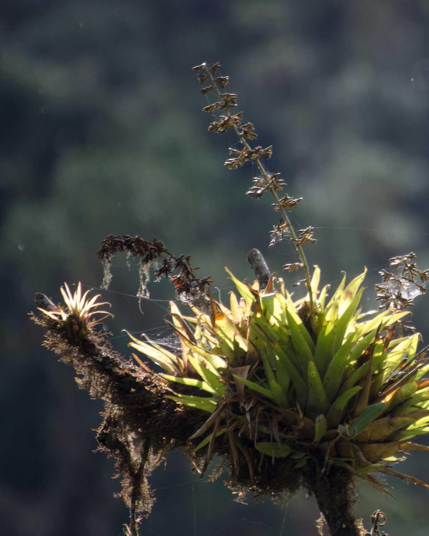 Bromeliads along the Ruta del Colobrí, Ecuador | ©Angela Drake