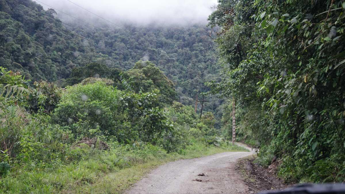 Paseo del Quinde, Nono to Mindo, Ecuador   ©Angela Drake