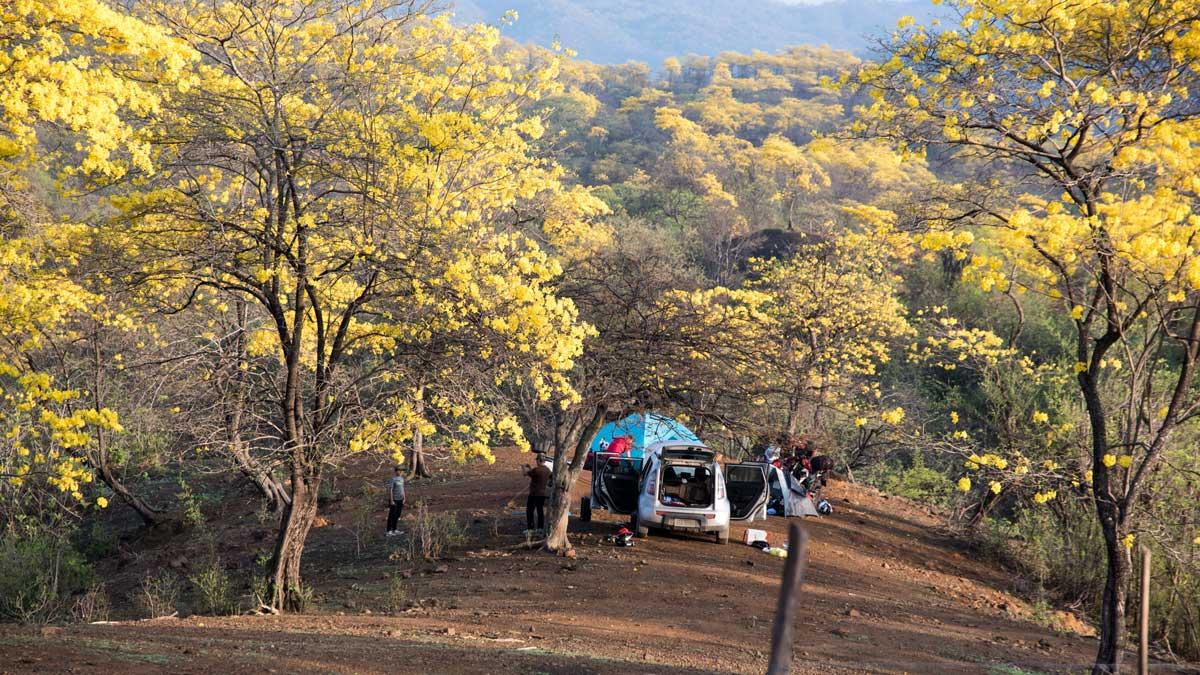 Camping among the Guayacanes; Mangahurco, Ecuador | ©Angela Drake