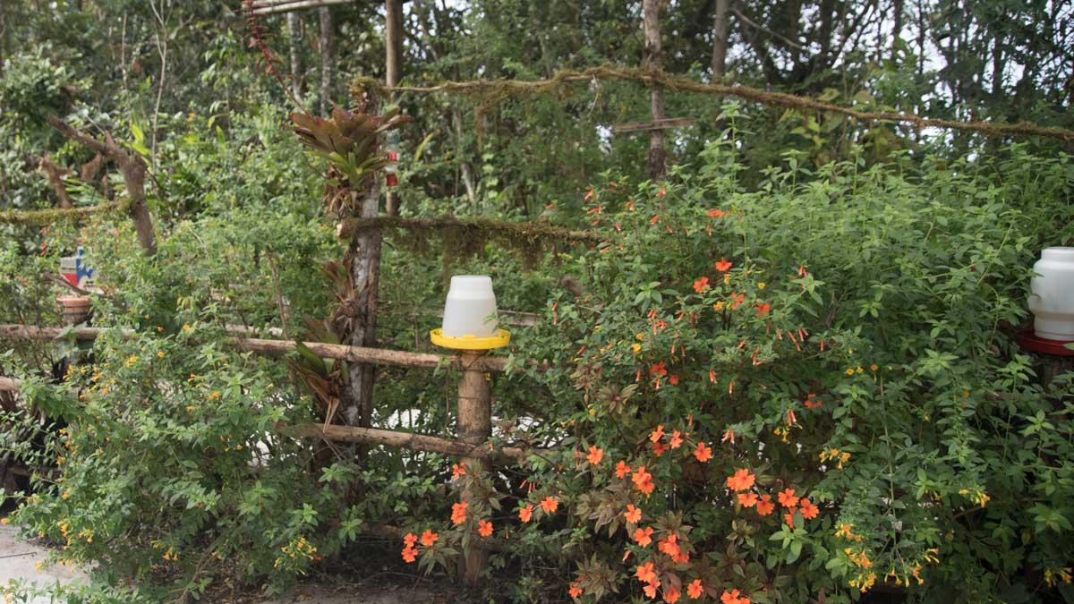 The Hummingbird Garden, the Birdwatcher's House, Santa Rosa de Mindo, Ecuador | ©Angela Drake