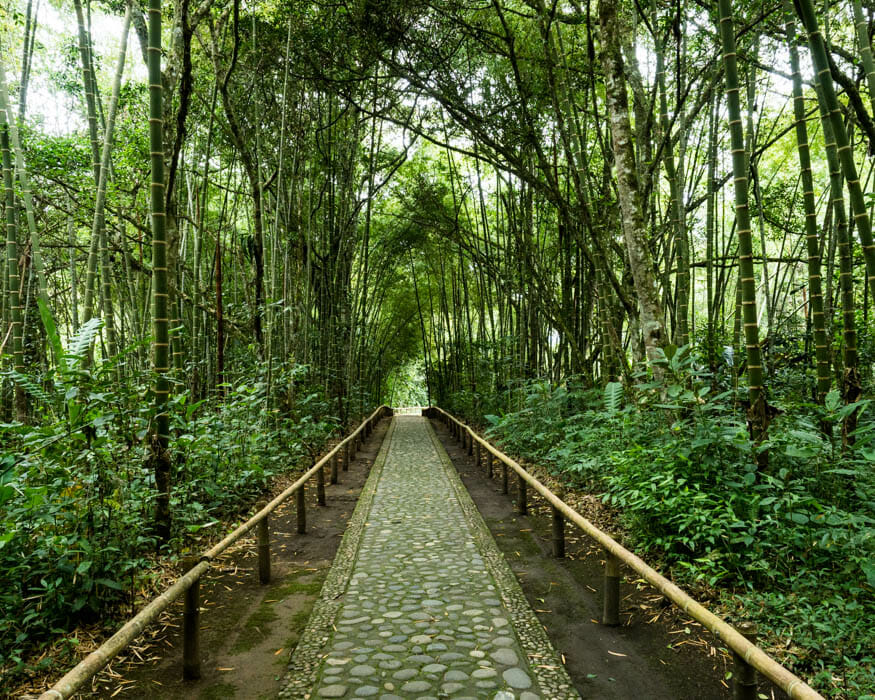 Forest trail at the San Agustin Outdoor Archeology Museum | ©Ernest Scott Drake
